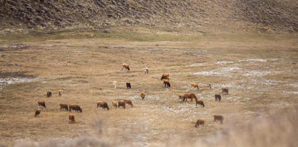 Brindarán cursos gratuitos en manejo extensivo del pastoreo